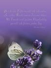 """Zum Muttertag: """"Durch die Lüfte möcht ich schweben... Motiv Schmetterling im Lavendel quadratisch Text C. Scharf"""