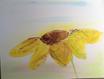 Margit Anglmaier: Blume gelb