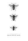 POSTER / VINTAGE BEE