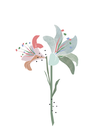 POSTER / SPRING LILY