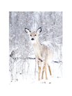 POSTER / PHOTO OH DEER