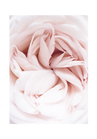 POSTER / PHOTO PINK FLOWER