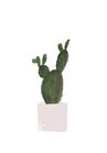 POSTER / CACTUS PLANT