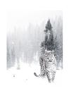 POSTER / PHOTO SNOW LEO