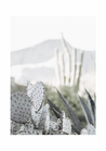 POSTER / PHOTO CACTUS NO.2