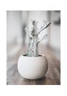 POSTER / PHOTO PLANT