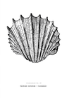 POSTER / VINTAGE SHELL NO.3