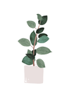 POSTER / RUBBER PLANT