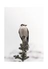 POSTER / PHOTO WINTER BIRD