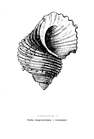 POSTER / VINTAGE SHELL NO.1