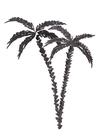 POSTER / BLACK PALMS NO. 2
