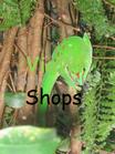 "Foto ""grünes Gift"""