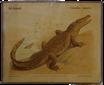 Nil-krokodil