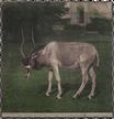 Addax-Antilope (2)