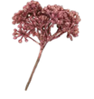 Pistilli Glitter Rosa Renkalik PDL10635