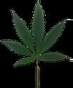 Hanfpflanzen, Medium, 15 bis 40 cm