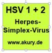 HSV 1 + 2