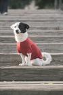t-shirt per cane