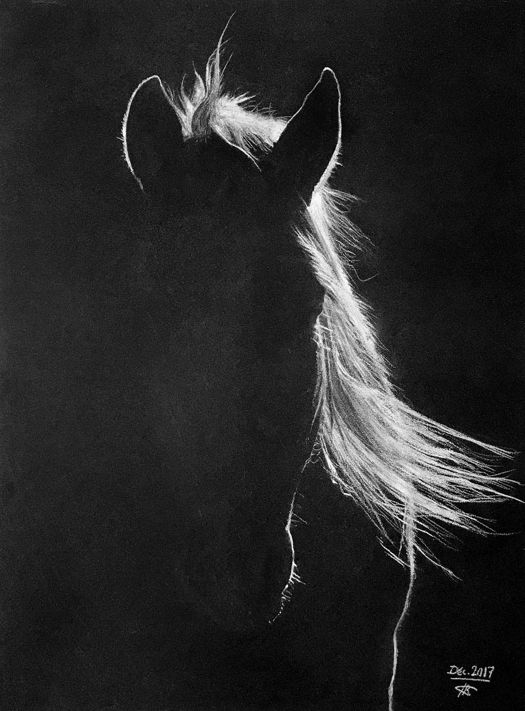 clair-obscur d'une tête de cheval