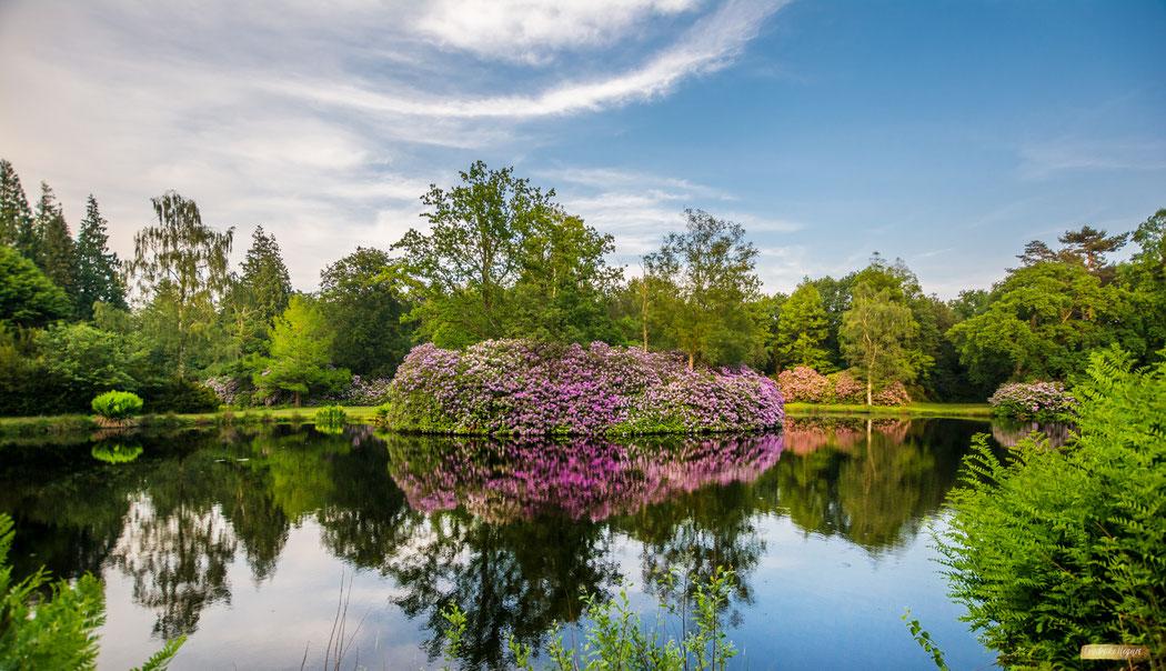 wunderschöne Parklandschaft | Schlosspark Lütetsburg in Ostfriesland | Landschafts- und Gartenfotografie
