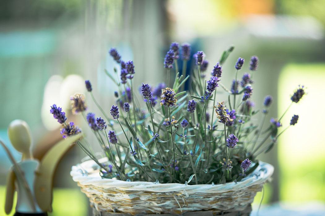 Lavendel dekoriert die Trauung im Garten der Villa Gückelsberg