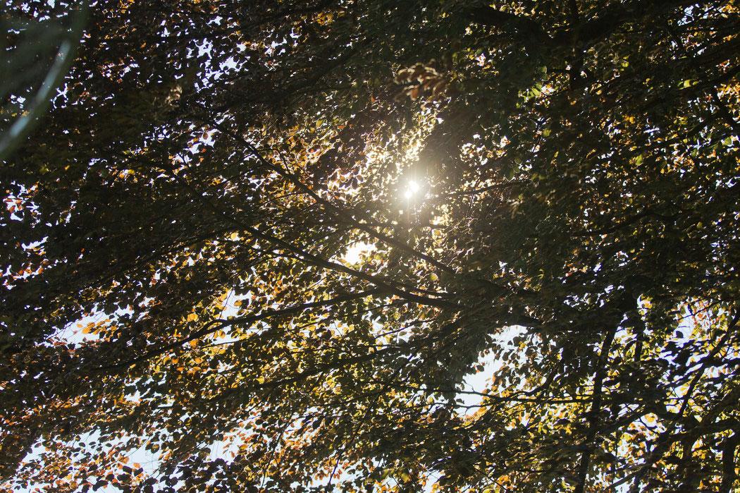 Die alten Bäume im Park der Villa Gückelsberg sind magisch