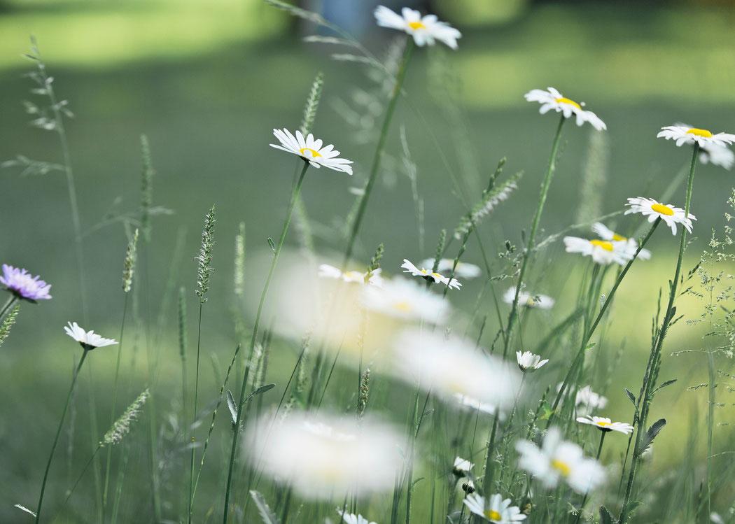 Blumen im Park der Villa Gückelsberg Flöha