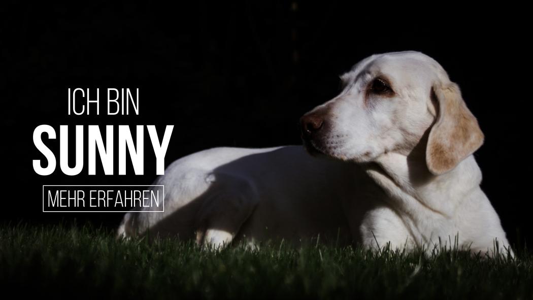 Canelo Dog Sunny