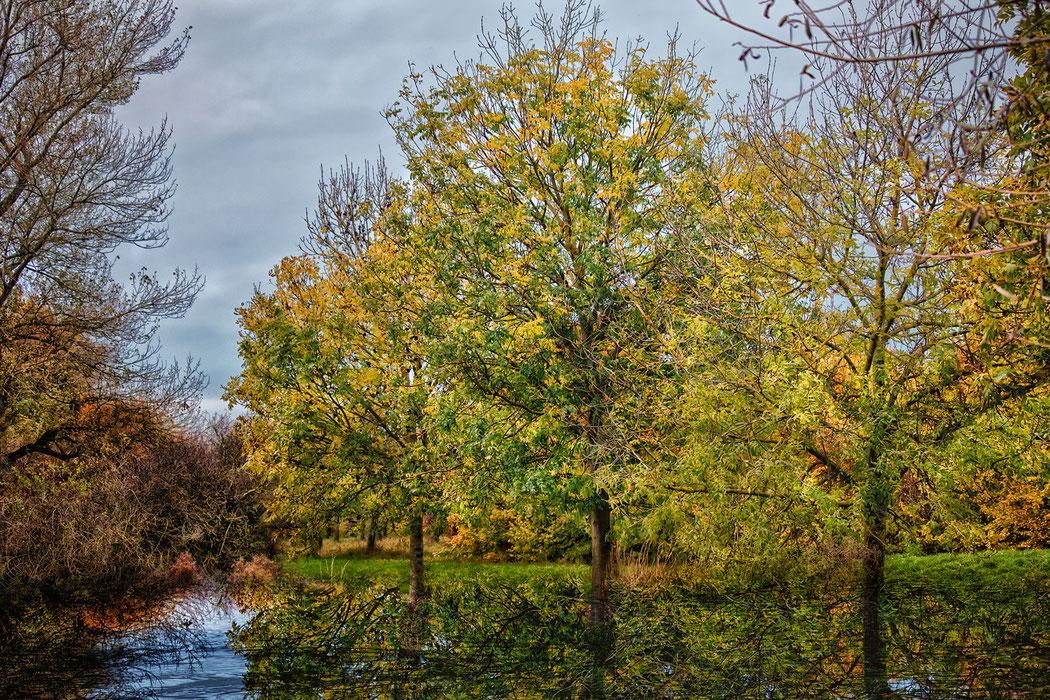 Langsam färbt sich das Laub an den Bäumen im Herbst - Bäume im Herbst