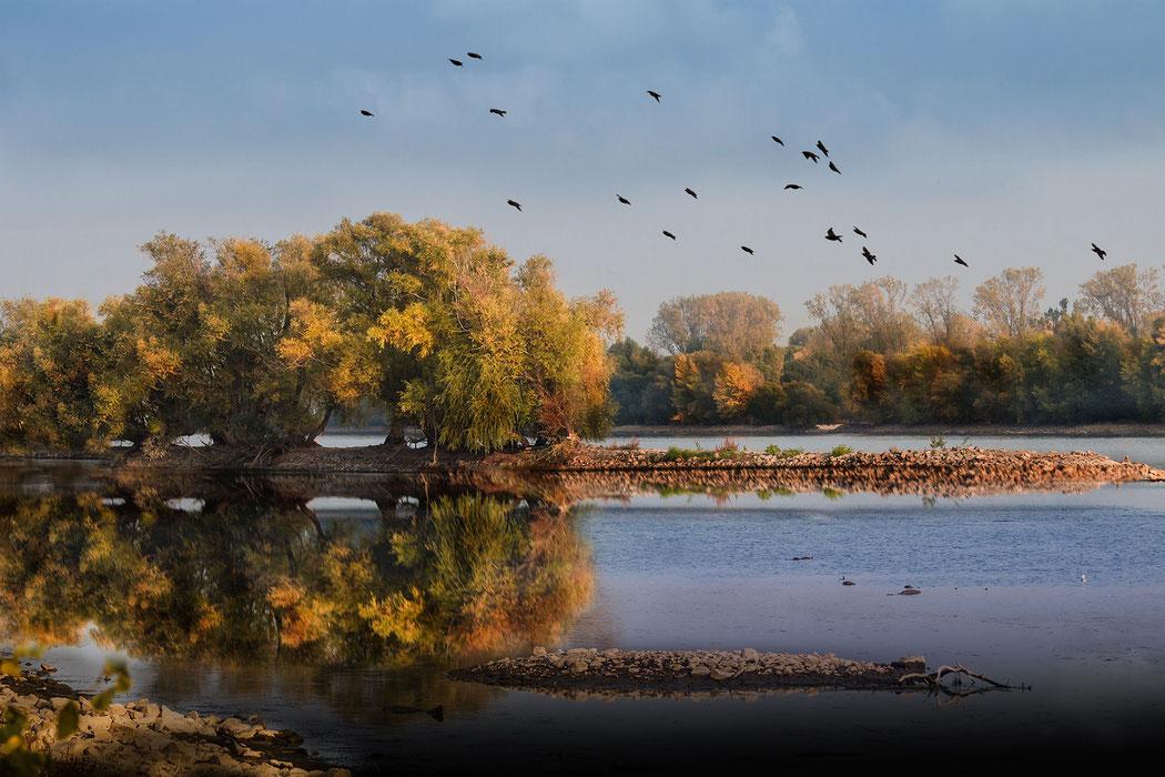 Bunte Herbstbäume spiegeln sich im Wasser des Rheins - Kostenlos und lizensfrei Bilder downloaden bei mjpics.de