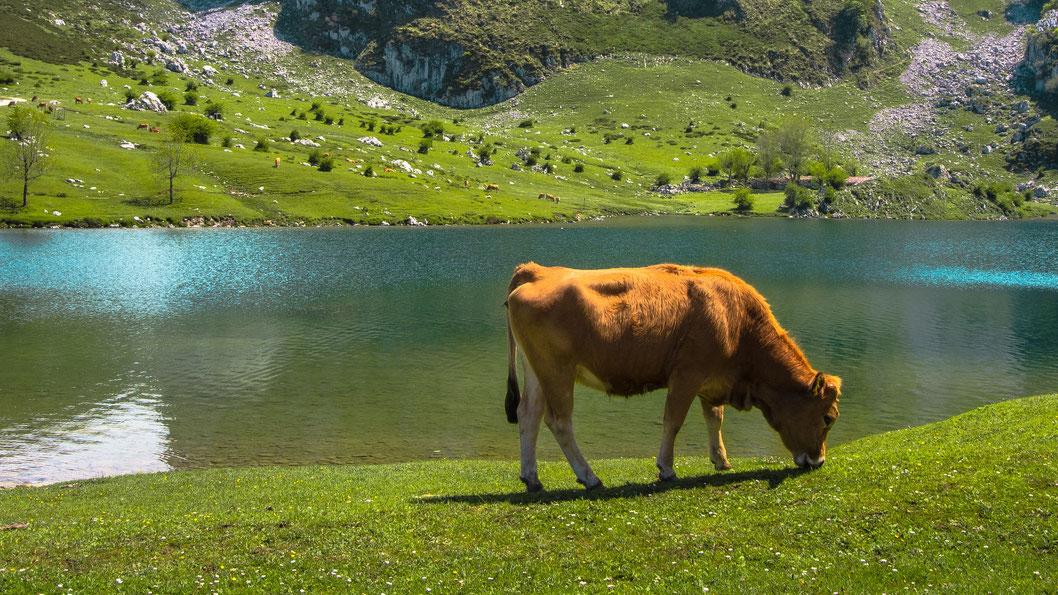 Lago de Enol, National Park Los Picos de Europa, Asturias, Spain
