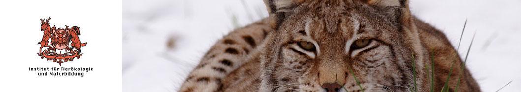 Referenzen |Institut für Tierökologie und Naturbildung