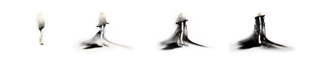 Ursula Groser| Autolyse | Fotoserie, 2014
