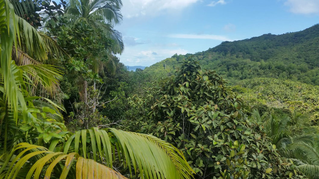 Blick von oben auf das Vallée de Mai
