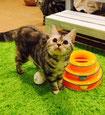 自由に遊ぶ親猫