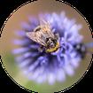 Naturfotografie, Insekten