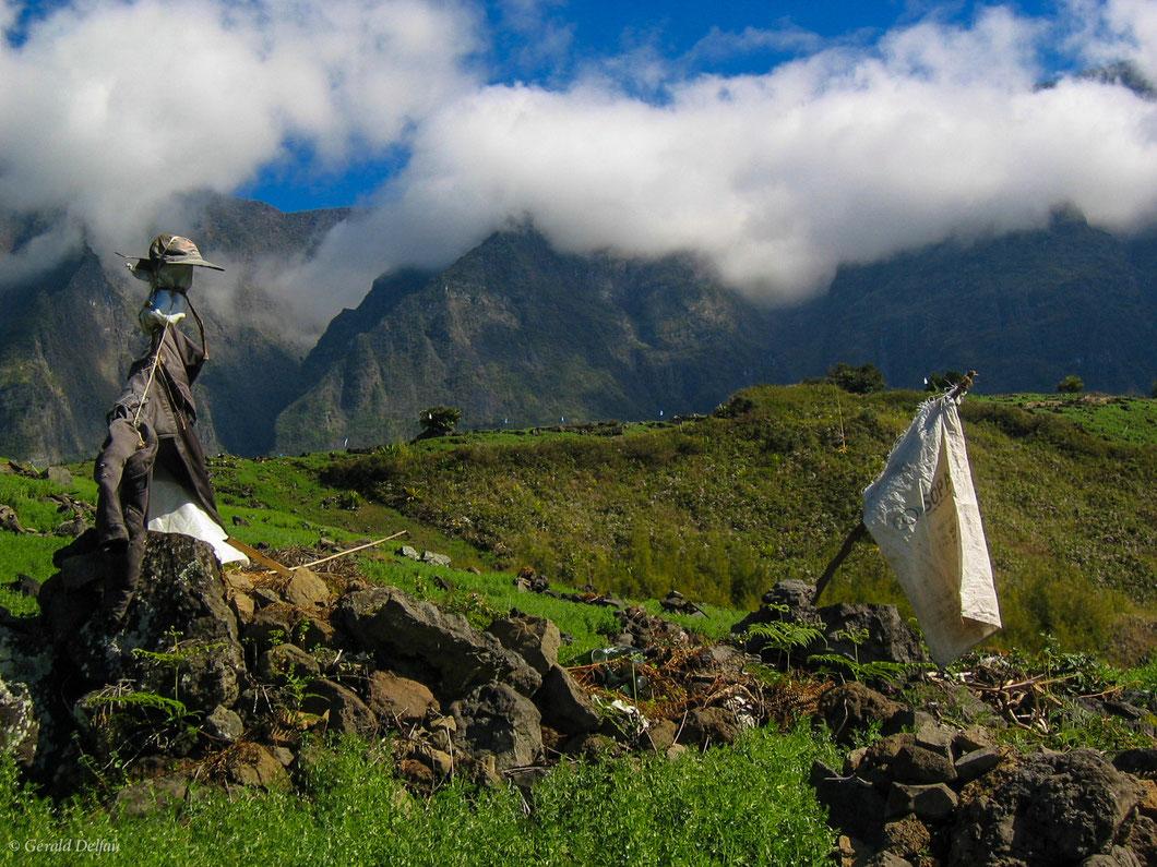 Dans le cirque de Salazie de la Réunion, épouvantail regardant interrogateur le drapeau blanc