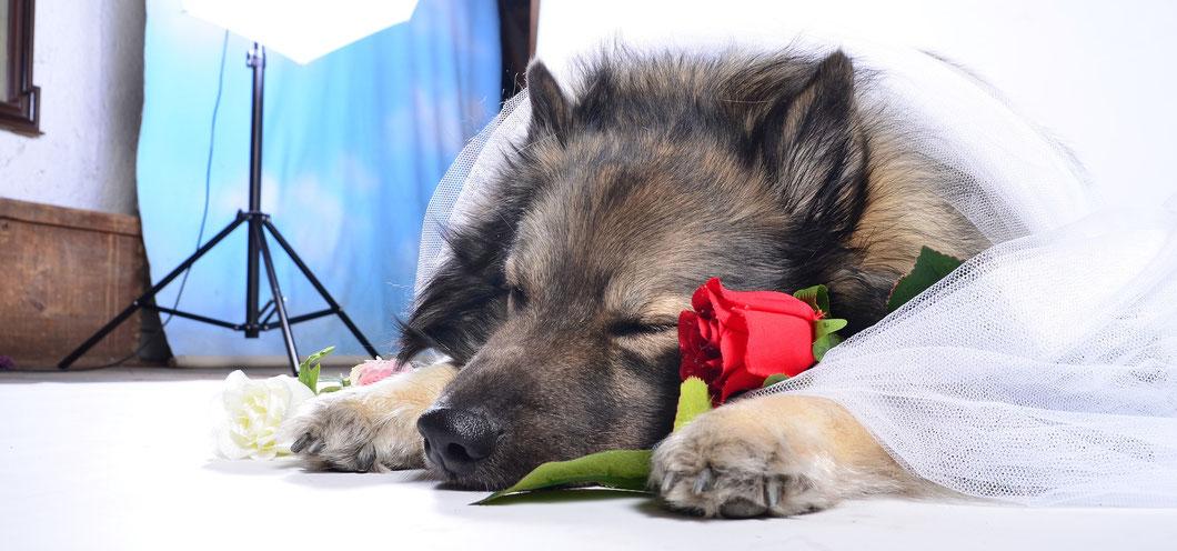 Ihre Hochzeit Mit Hund En Tierbetreuung Fur Huf Pfotchen