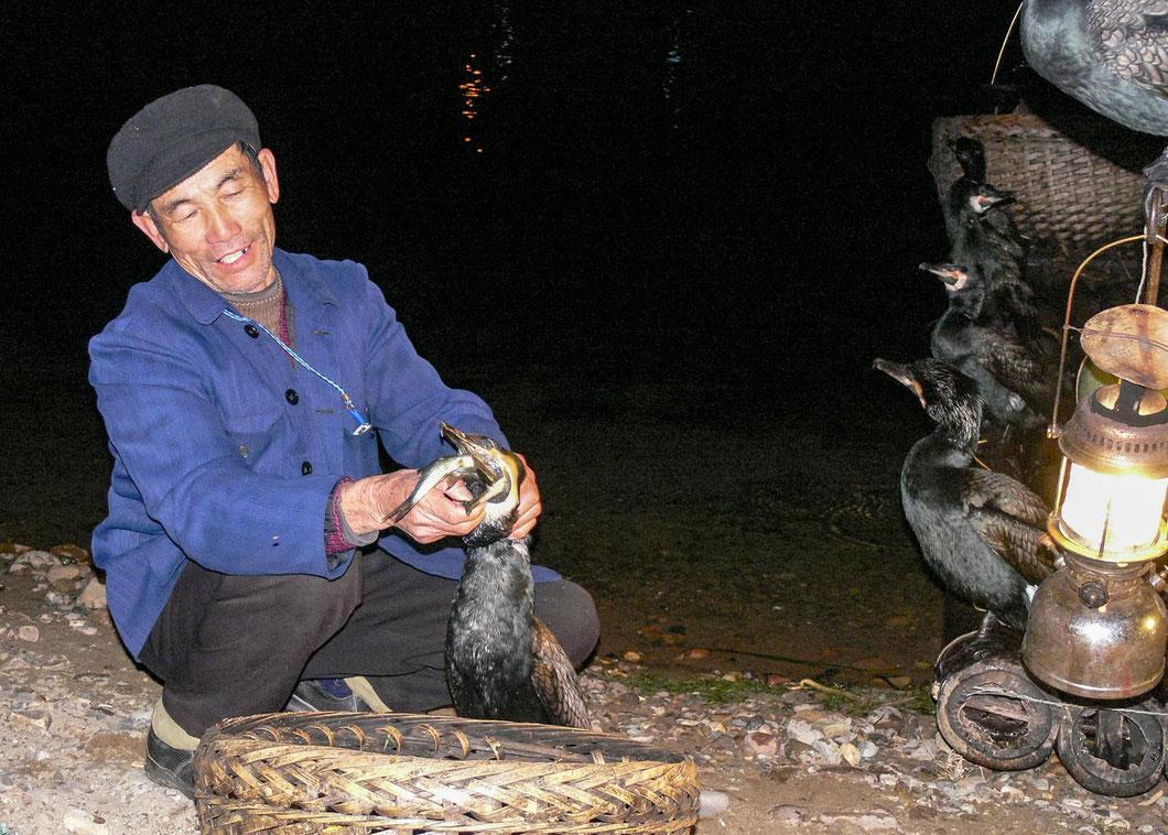 Kormoranfischer in Yangshuo