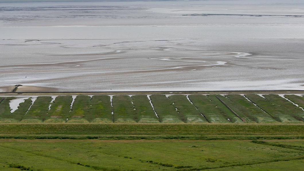 Norderneyer Watt - hinter der Deichkrone wurde dem Meer Land abgerungen, jetzt bieten Salzwiesen Platz für die Brutvögel. Dahinter liegt die bei Niedrigwasser trockengefallene Nordsee, mit ihren Prielen (Wasserwegen)