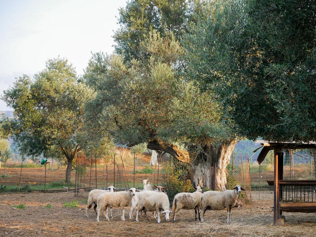 überall stehen kleine Höfe an den Straßen, freundliche Menschen laden uns ein und zeigen uns ihre Tiere