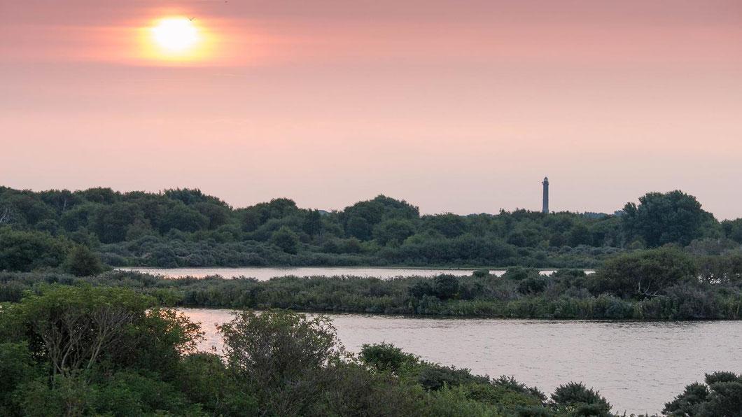 Norderney - Blick über das Naturschutzgebiet Südstrandpolder in Richtung Leuchtturm