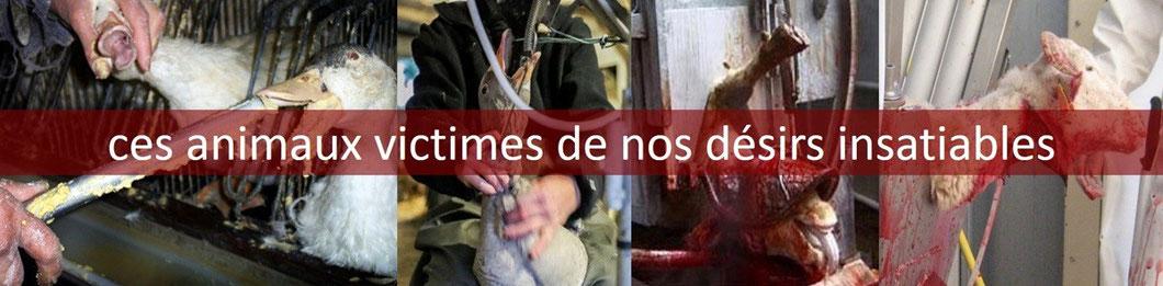 Des animaux victimes de nos désirs insatiables