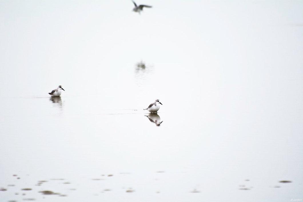 Oiseau D7-14_007R x30