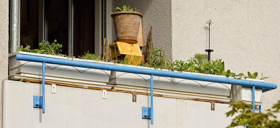 04.05.2013. Immerhin kann man die Balkonbepflanzung jetzt schon von der Straße aus erahnen. Der Frühlingsanfang in diesem Jahr ist unglaublich zäääääääääääääääääääääh!