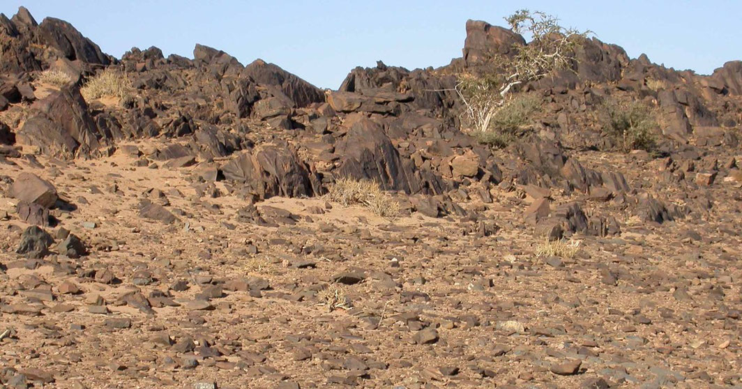 Barre rocheuse ensablée à Maerua crassifolia aux alentours de Tata © Jean-Paul Peltier