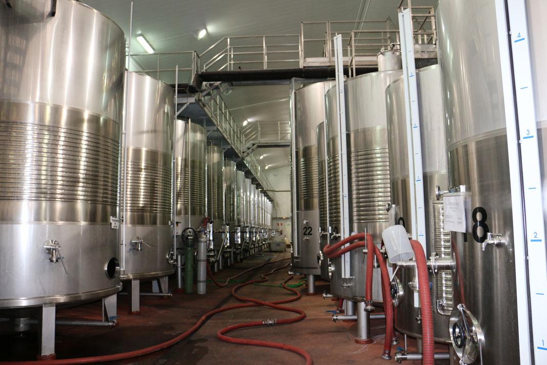 Stahltanks Viñaoliva Zaleo Almendralejo Ribera del Guadiana Extremadura Tierra de Barros Südspanien Wein