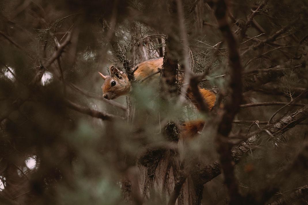 Eichhörnchenkobel-eichhoernchen-Futterhaus _sam Moqadam