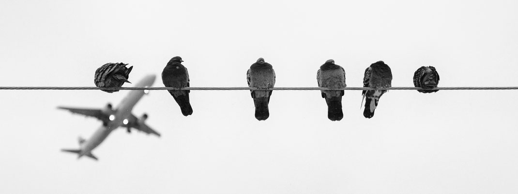 Passion for pigeons. Love for pigeons, dove and birds. Art God & Love Inc. © 2020, Pixabay image. Love for birds, pigeons resting on an electric cable.