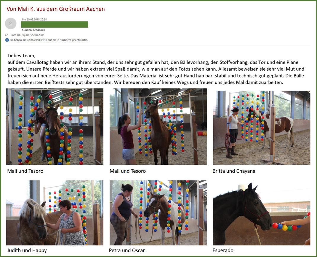 Bälletor, Kurs Horsemanship, Hindernis Gelassenheitstraining